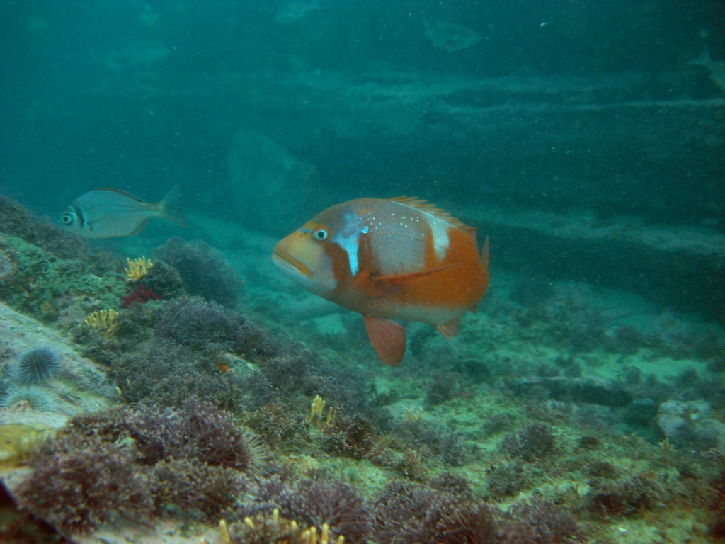 SANParks Ecologist explains upwelling events and fish wash outs